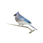 Reconnaître les chants d'oiseaux : Birdnet