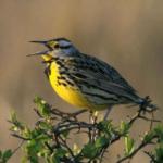 Chants d'oiseaux comme alerte téléphonique